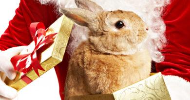Кролик 1939, 1951, 1963, 1975, 1987, 1999, 2011, 2023