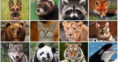 Какое животное соответствует Вашему Знаку Зодиака?